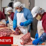 Coronavirus: Why are there outbreaks in meat processing plants? – BBC News