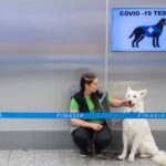 An airport in Finland is using dogs to detect the coronavirus, and researchers say they are 'close to 100%' accuracy